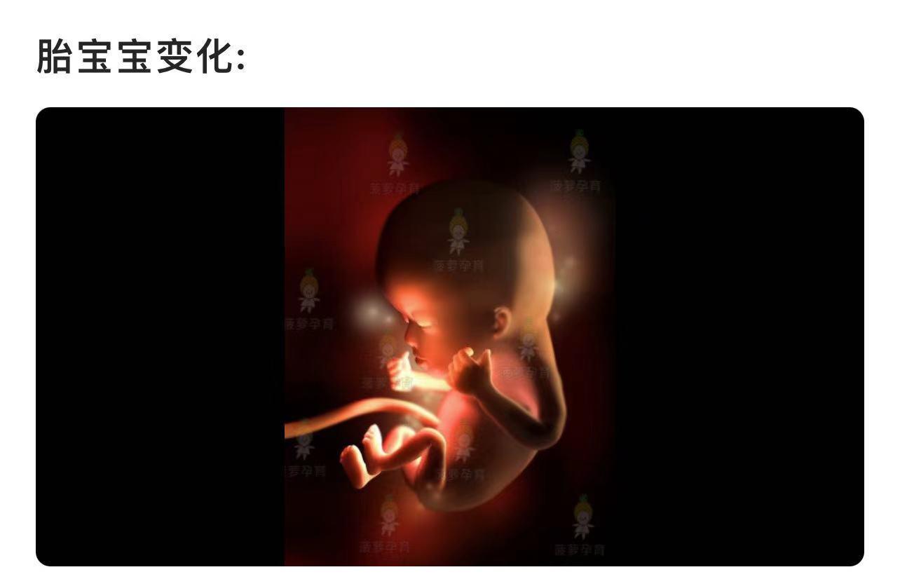 12周胎儿有多大